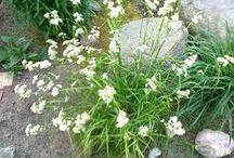 rośliny / plants