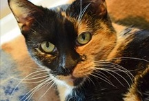 Kitties of a Certain Age