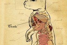 Medical Illustration / by Ginny Hussey