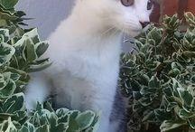 süßer als süß / Lustig und frech aber warm im Herzen. Diese Katze weis immer wo von sie spricht.
