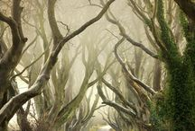Bome / Trees