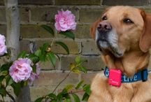 Locate Your Pet GPS Tracking Devices / All about our amazing tracking devices to keep your pet safe.  Never worry about losing your pet again!