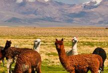 Peru, Bolivia, Chile