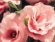 Flowers - EustoMaS