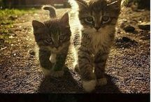 #kitty♡