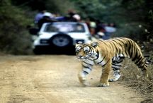"""PicaplaceTravls / A tour and Travel company which believes- """" A Holiday destination doesn't have to be memorable, it should be unbeatable"""". We offer numerous services like: 1) Theme Holiday Packages. 2) India Tours. 3) Corporate Group tour. 4) School / College Group tour. 5) Car and Coach Rentals. 6) Flight Booking."""