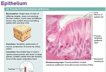 embryology & histology