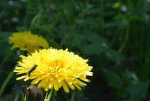 Příroda / Spring forrest - Jarní les