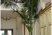 The Great Green Indoor!