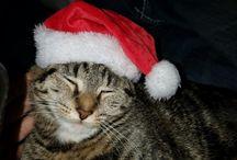 my holiday cats simba boots fuzzy