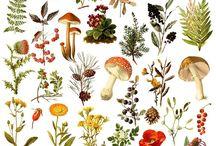 Botanica illustrazioni