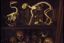 Taxidermy and skulls