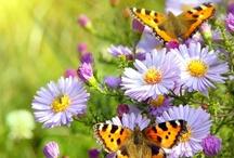 Butterflies / by Stephanie King