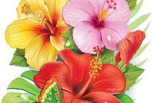 Drawings of tropical flowers