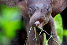 wildlife & babies
