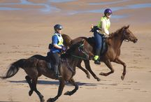 Endurance riding in Scotland / Information about endurance riding north of the border