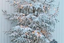 Winter / by Deborah Mahoney Leander