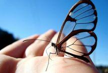 ♥Butterflies♥