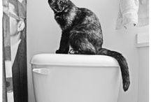 Pets & Pet Care / by Beth Harper