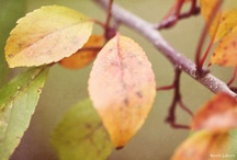 Autumn Inspiration / The lull of autumn in all its glory.