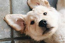fluffy dogs