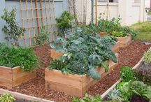 Edible Garden / Home grown food and ways of preserving produce
