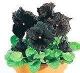 Botanical Interests - Edible Flowers