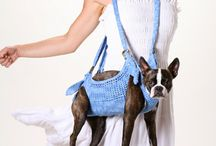Dog Transportation