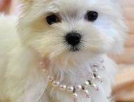 Puppy Love / by Tammy Griffin