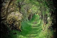 forest / by TaRasai White