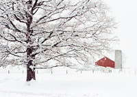 Winter / I would love winter more if I could hibernate in my cabin in the woods.