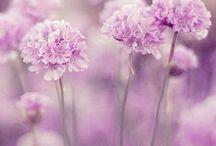 Colours: purple