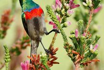 Ptáci / nádherní