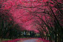 Nature so beautiful!!