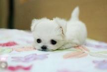 Sooo cute / by Deanna Jacobs