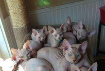a whole lot of purrfect nakedness ...