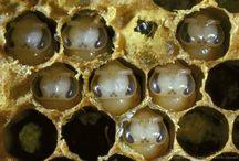 Včelařství