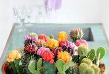 Cactussen, vet planten etc