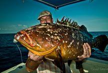 Fotos de Pesca / Mis pin de pesca