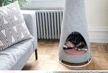 case pisici