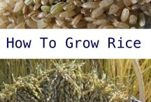 How to Grow...