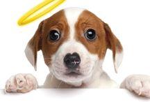 Puppy Training / Puppies