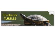 I Brake For Turtles / Funny I Brake For Turtles bumber stickers