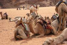 Giordania / Un viaggio sorprendente che mi ha lasciato un ricordo indelebile. La gente, i colori, e quella meraviglia di Petra, assolutamente da vedere!