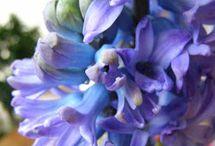 kwiaty i rośliny domowe