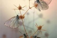 sevdamm..! bir kelebeğin kanadında