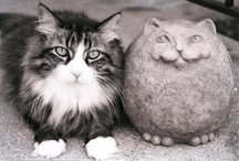 Cats / by Herb Beslanowitch