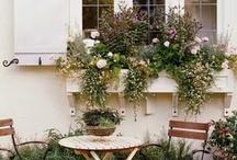 garden / by Angel Bowman