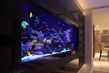 Aquariums on Rental Basis