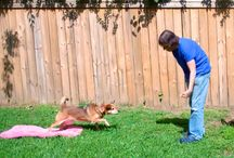 Multiple dog households / Tips and tricks for households with lots of dogs!